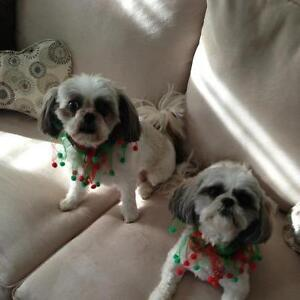 IN YOUR HOME CARE FOR TWO WELL BEHAVED SHIH TZU'S!!!
