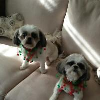 TWO WELL BEHAVED SHIH TZU'S CARE NEEDED IN YOUR HOME!