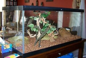 2 corn snakes, tank, white stand and everything in the tank $200