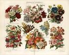 Antique Flower Print