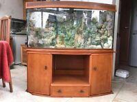 Large Bow Fronted Aquarium