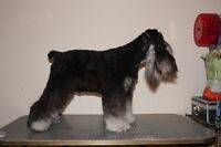 Professional Mobile dog & cat Grooming