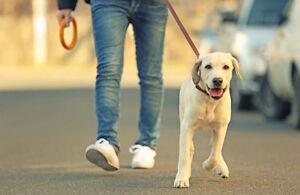 dog walking, pet sitting