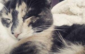 Female calico cat needs a new home