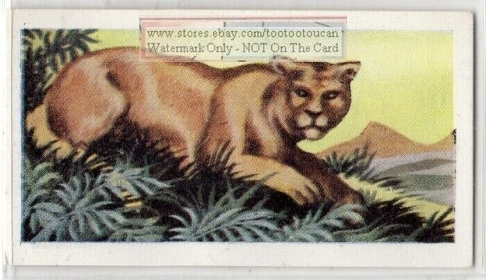 Puma Cougar Large Wild Cat Feline America  Vintage Ad Trade Card
