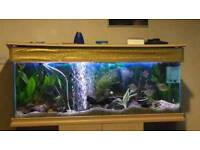 4ft tank with fish etc