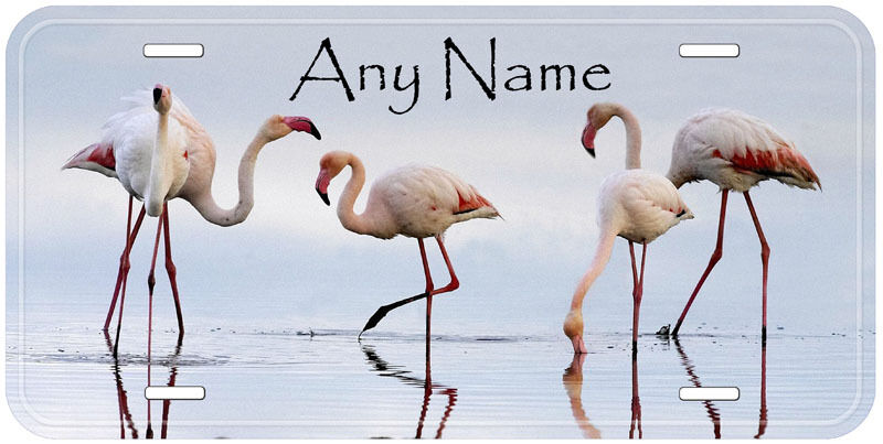Flamingos Any Name  Auto Car Tag Novelty License Plate