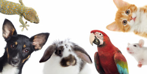 ****EXPERIENCED PET SITTER****