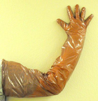 Shoulder Length Gloves Ebay