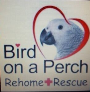 Bird on a Perch Rehome & Rescue