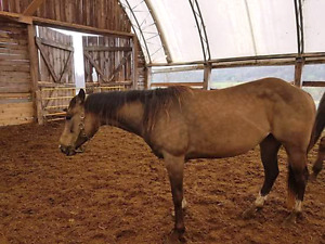 Need help saving mare from meat dealer