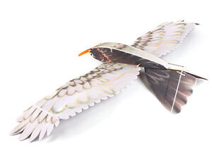 RC EPP Eagle with Brushless M, Speed C, Servos and 6ch Rx Cornwall Ontario image 5