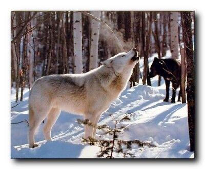 Wall Decor Grey and Black Wolf in Snow Wildlife Animal Room Art Print (16x20)