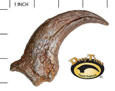 Anzu (Chirostenotes/Caenagnathid) Hand Claw - Cast Replica, Dinosaur Claw (SN5)