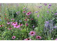 Garden Design, Garden Planting and Garden Maintenance