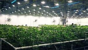 CANNABIS FACILITIES  We are experienced in building complete turnkey operation facilities for Cannabis / Marijuana