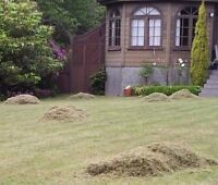 Lawn Dethatching Services
