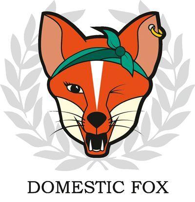 Domestic Fox