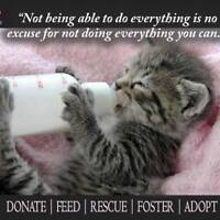 looking for volunteer rescue group