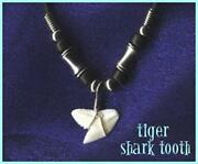 Tiger Shark Tooth