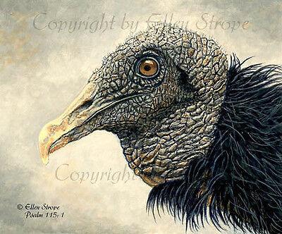 Black Vulture, Birds, Raptures, Note Cards, Cards, Blank Cards, Bird Art