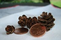 WEDDING/HOME/CRAFT DECOR WITH ECO FRIENDLY NATURAL MINI PINECONE