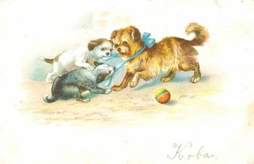 Rare Old Dog Postcard Brussels Griffon Playing With 2 Pals Netherlands c1908