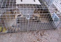 GTA sameday wildlife humane raccoon squirrel skunk bird removal