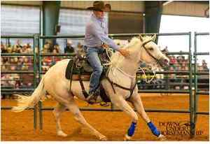 Clinton Anderson Clinician Clinic - July 1 - 3 rd