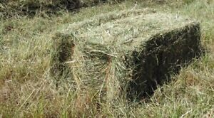 Square Hay Bales- Great Horse Mix