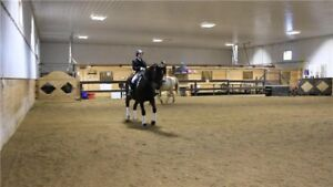 Horse boarding inside Winnipeg in heated barn and arena