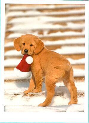 Golden Retriever Santa Christmas Cards - Box of 12