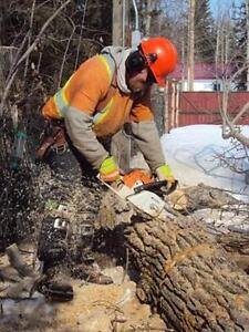 Tree Removal >Tree Triming >PruninG,FALL SPECIAL...... Kitchener / Waterloo Kitchener Area image 1