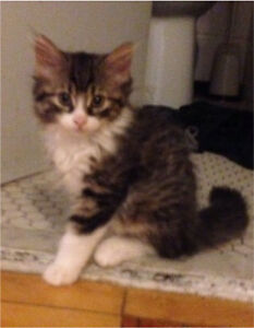 Beautiful kittens need a home