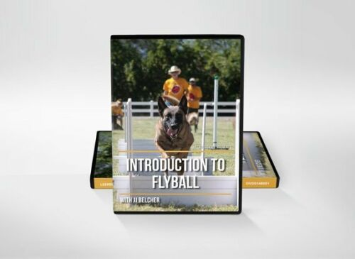 Introduction to Flyball with JJ Belcher by Leerburg