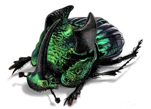 ONE REAL GREEN PHANAEUS DEMON MALE HORNED RHINOCEROS DUNG BEETLE PINNED