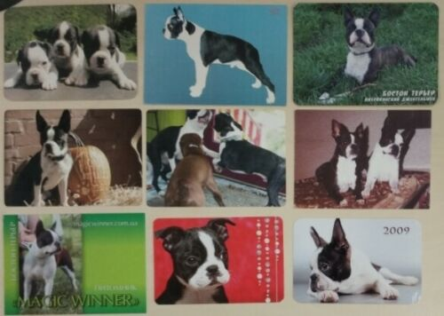 15pcs! Rare Original calendar cards Boston Terrier, Dog Puppy Pet, vintage photo