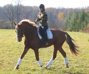 Horse back riding Camps lessons and Programs
