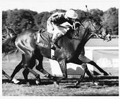 Vintage Horse Racing Photos