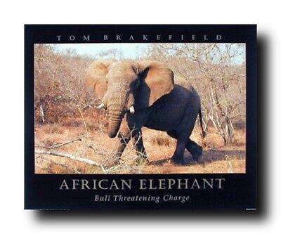 African Elephant Safari Living Room Wall Decor Art Print Poster - Elephant Room Decor