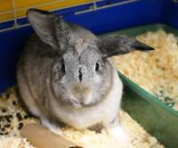 "Young Male Rabbit - Bunny Rabbit: ""Sno Cone"""