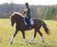 Traning Clinic (Something for every horse enthusiasts)