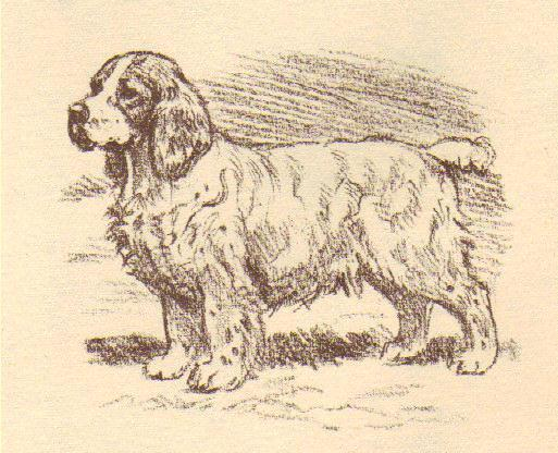 Clumber Spaniel - Vintage Dog Print - 1954 Megargee