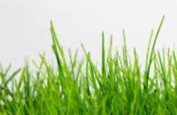 Grass Cutting Lawn Care Starting @ $25.00
