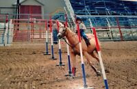 Youth approved rodeo horse