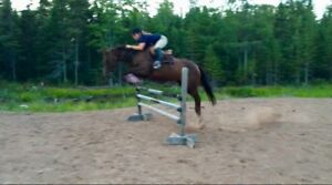 Horse for sale!