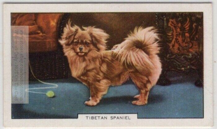Tibetan Spaniel Dog Canine Pet 1930s  Ad Trade Card