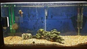 Beginner Freshwater tank setup w Fish! Strathfield Strathfield Area Preview