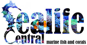 Sealife Central Your location for Saltwater Aquariums