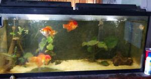 55g Aquarium For Sale